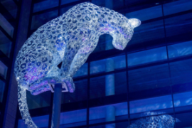 Illuminating Leopard Poised in Aberdeen